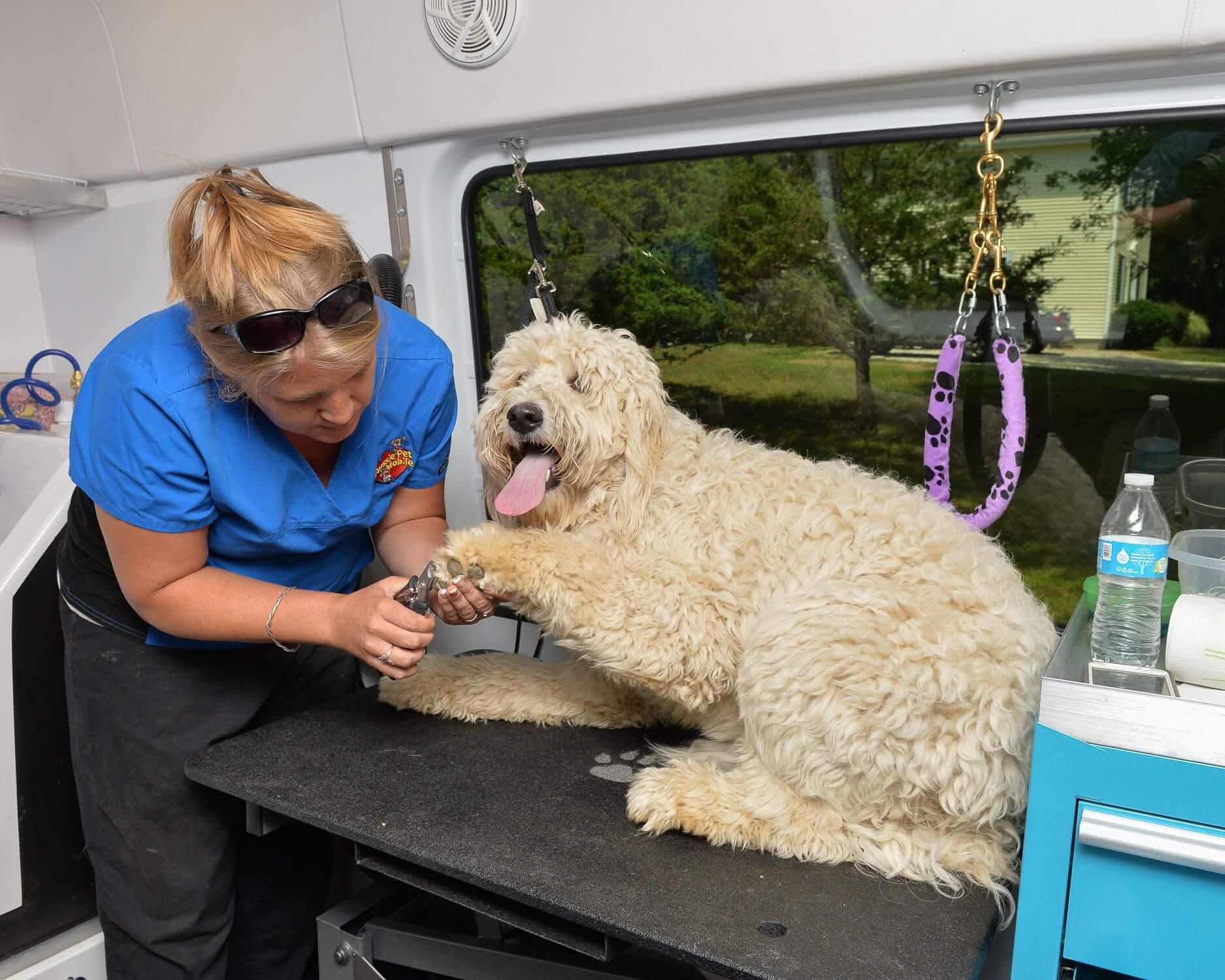 Dog Grooming Lafayette Ca