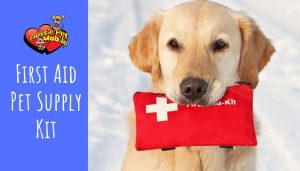 First Aid Pet Supply Kit